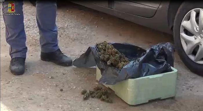 Droga: cani poliziotti fanno trovare 650 gr marijuana in azienda agricola