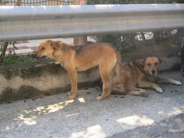 Cani Mangiano Il Cadavere Della Padrona A Messina Lurlo News E
