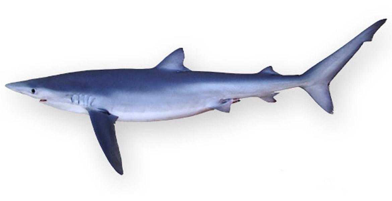 Turisti avvistano squalo a catania tanta paura ma nulla - Immobiliari a catania ...